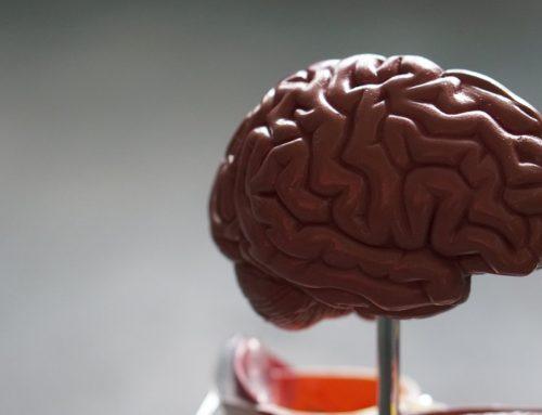 Skills Masterclass: Brains For BREXIT